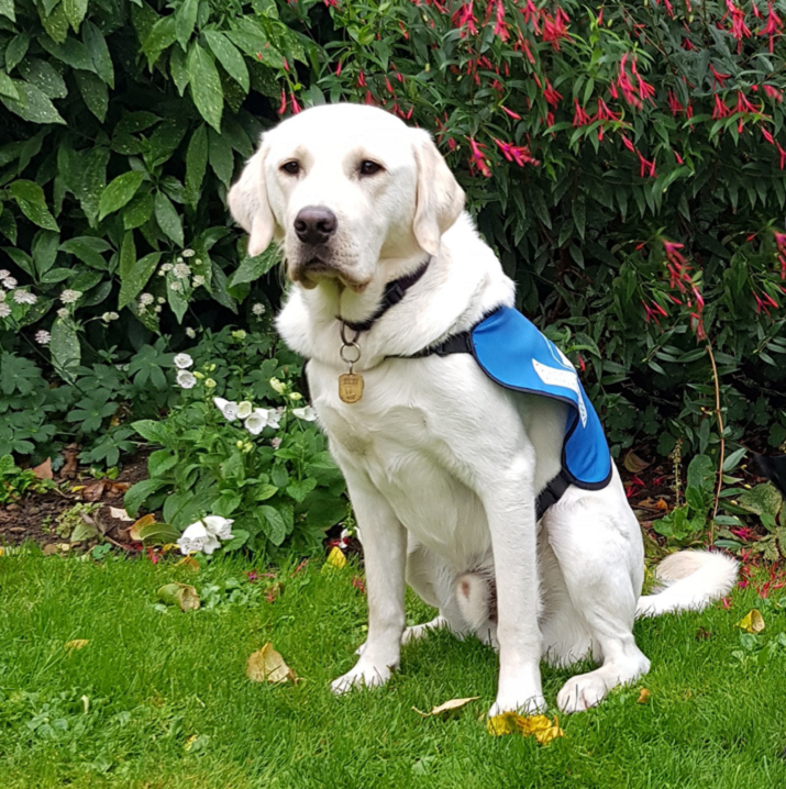 Quince the Award Winning Guide Dog