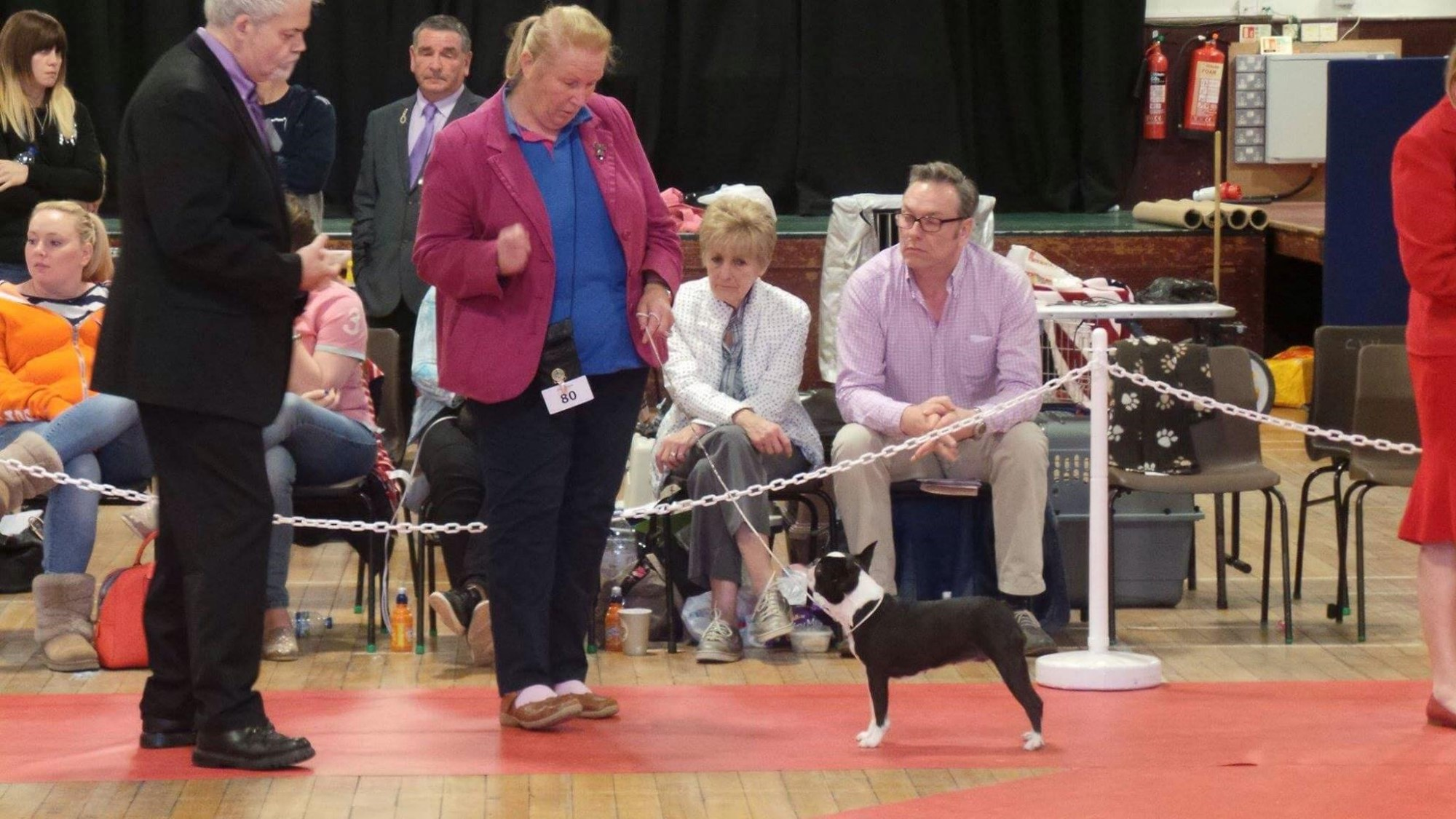 Taravon Sassy winning Limit at Boston Terrier Club of Scotland