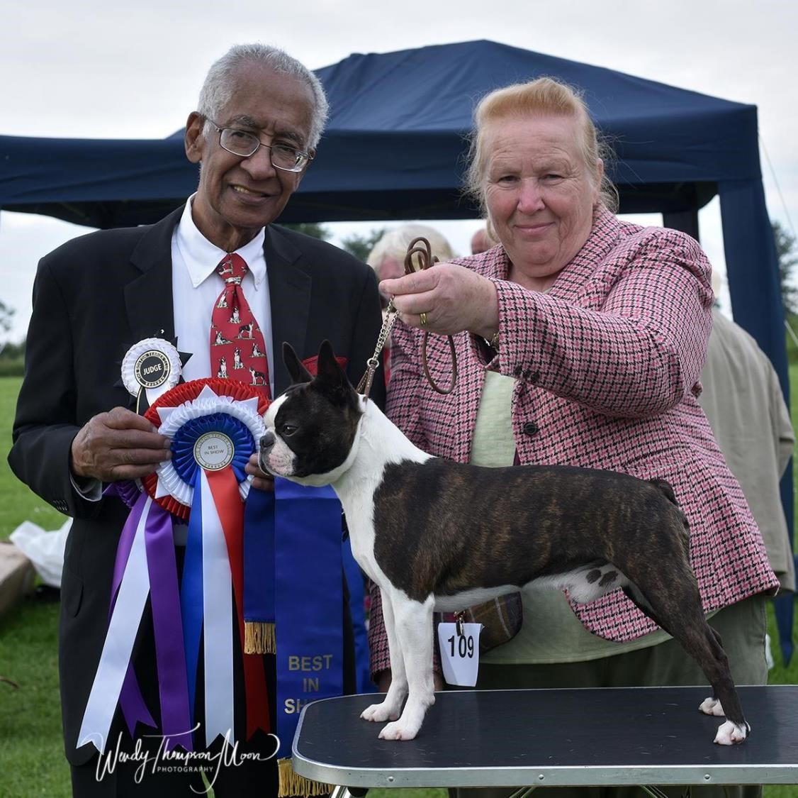 Taravon Shooting Star winning CC at Boston Terrier Club Championships